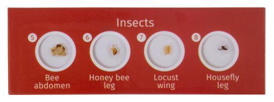 Набор микропрепаратов Levenhuk LabZZ CP24, существа и растения